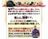 犬しつけ ドッグトレーナー藤井聡が教える犬のしつけ教室